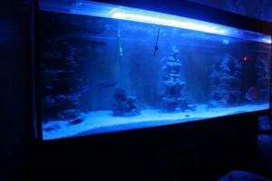 Светодиодное освещение аквариума не вредящее растениям