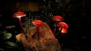 Изготовление ночного светильника «Сказочный лес» своими руками